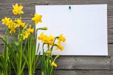 Message and spring daffodils against wooden background stock vector