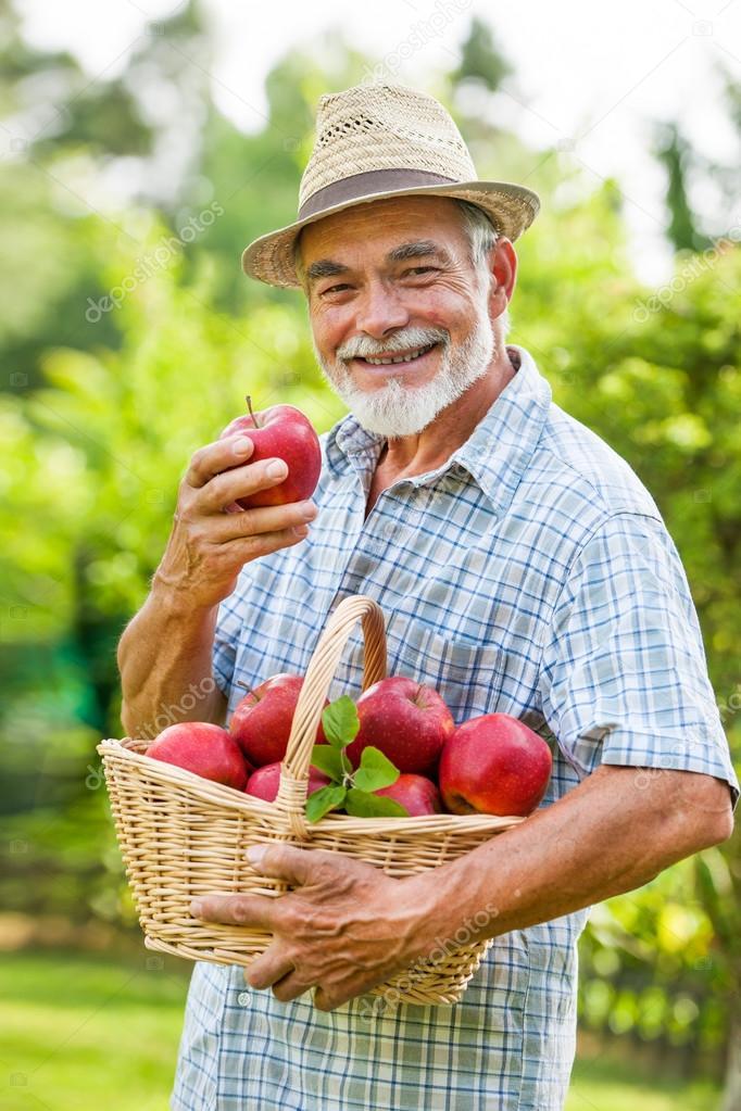 Gardener holds a basket of ripe apples
