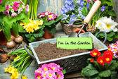 Fotografie Ich bin im Garten Zeichen