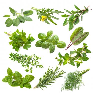 Kitchen herbs collection