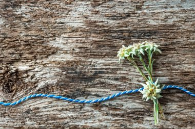 Edelweiss flowers with Bavarian gift cord