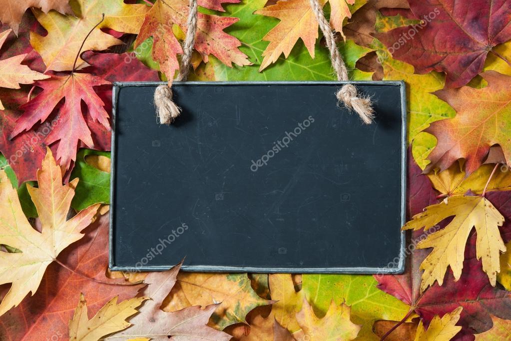 Chalkboard  on autumnal leaves