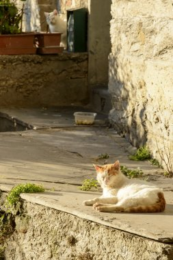 stray cat in the sun, Lavagna, Italy