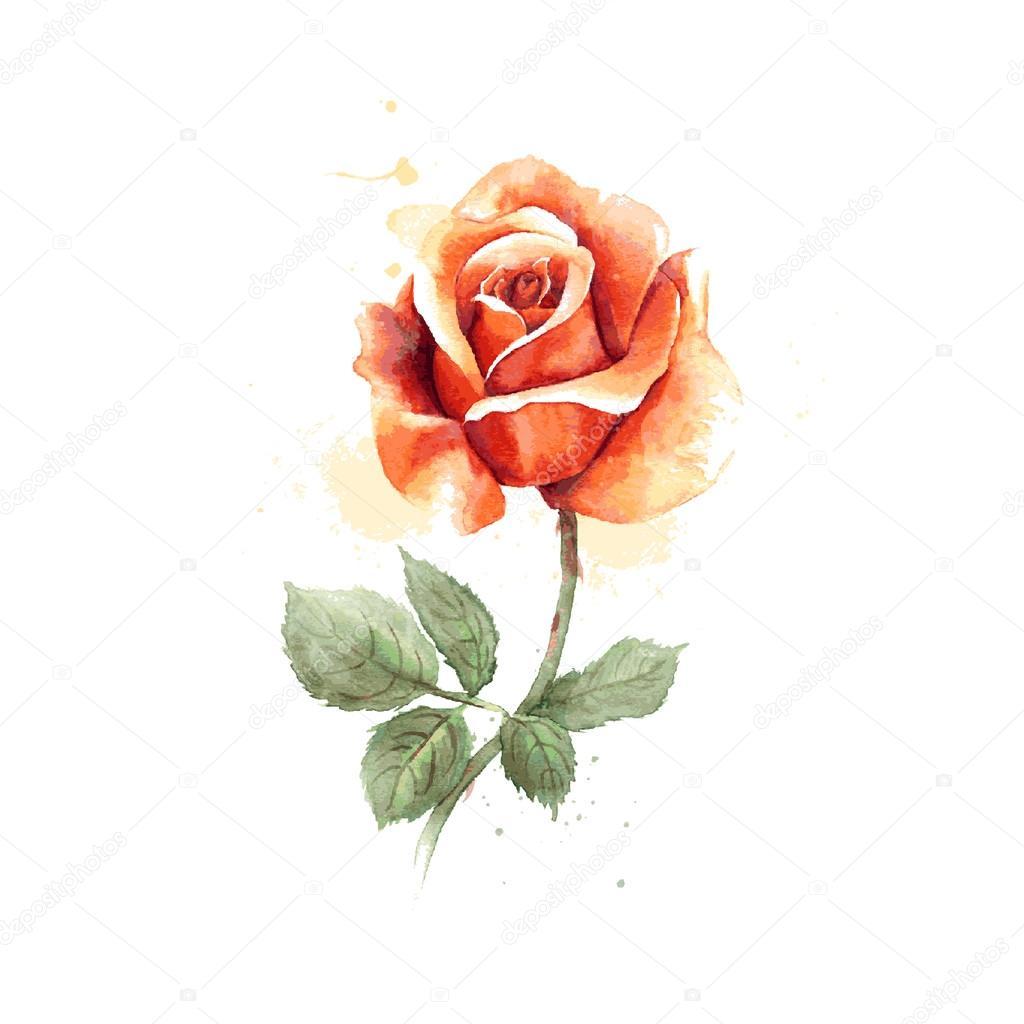 Dessines A La Main Aquarelle Rose Image Vectorielle Fearsonline