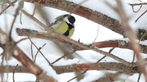 kuřecí skoky na větvích a v zimě jí v krmítku