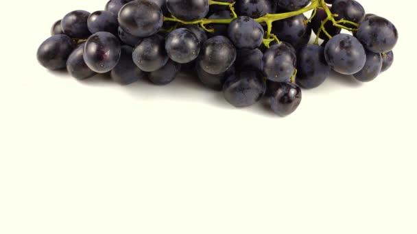 Moldova black grapes on a white background