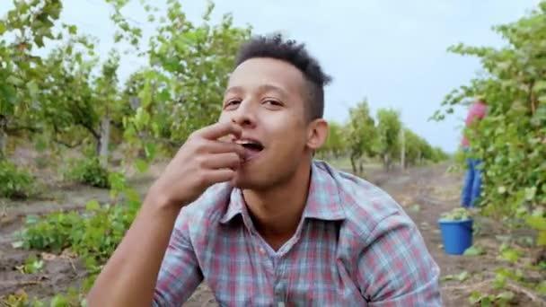 Attraktiver und lächelnder großer Afroamerikaner, der vor der Kamera ein paar leckere Bio-Trauben inmitten des Weinberg-Konzepts der Landwirtschaft und des ökologischen Landbaus isst