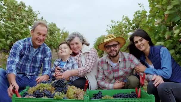 Velcí usměvaví rodinní příslušníci společně pózují před kamerou uprostřed vinice a sbírají hrozny sklizně na podzim