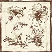 kézzel rajzolt vázlat hibiszkusz virágok