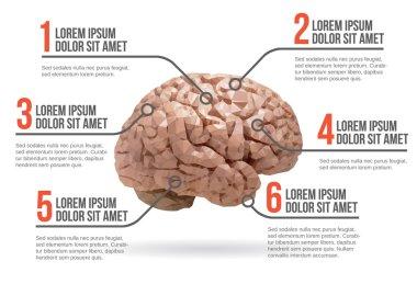 Human brain infographic, vector illustration