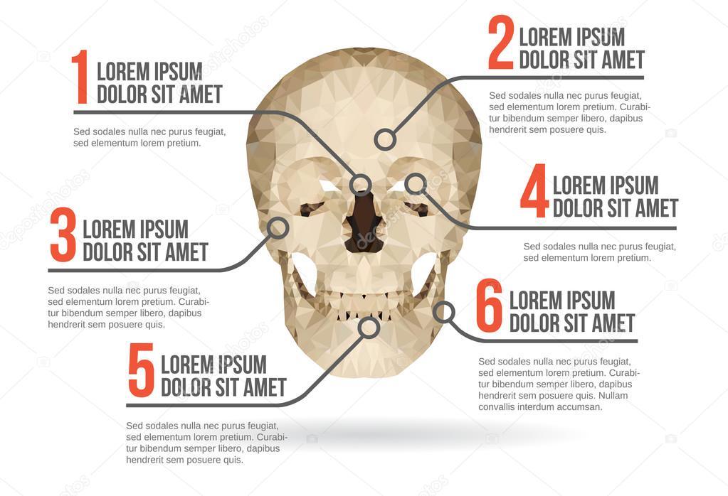 Cráneo humano infografía, ilustración vectorial — Vector de stock ...