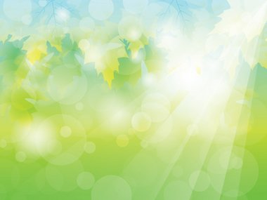 Summer or Spring sunny green leaves background vector