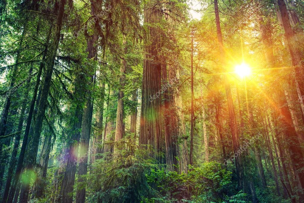 Фотообои Живописный Лесной Закат