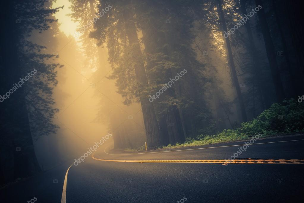 Фотообои Foggy Forest Road