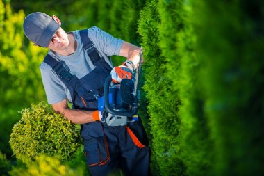 Hedge Trimmer Works. Gardener with Gasoline Hedge Trimmer Shaping Wall of Thujas. stock vector