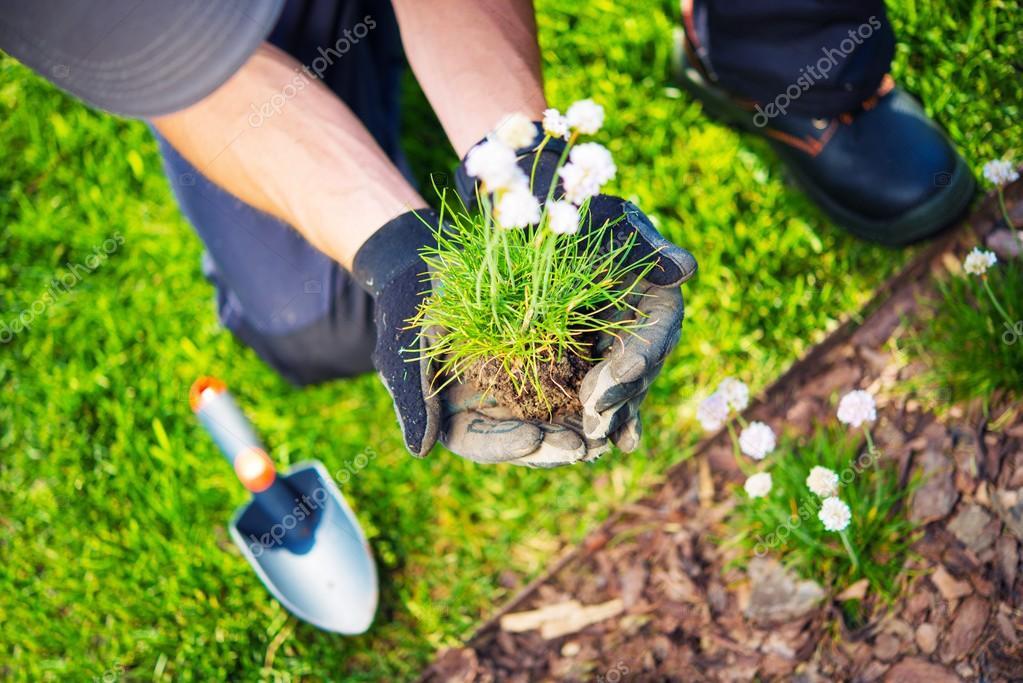 Gardener Replanting Flowers