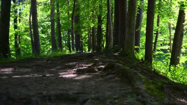 Fußweg in einem dunklen Wald