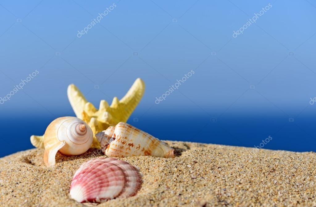 Conchiglie e stelle marine su una spiaggia di sabbia for Immagini sfondo mare