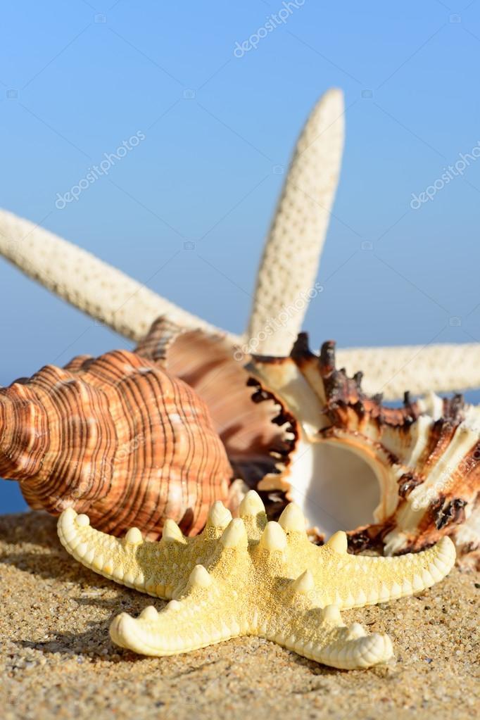 Conchiglie E Stelle Marine Su Una Spiaggia Di Sabbia Sullo Sfondo