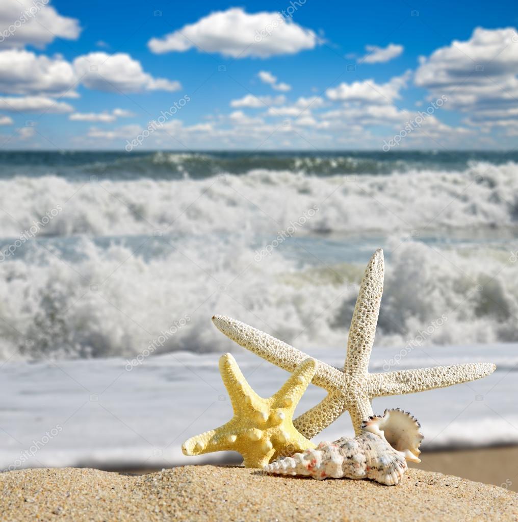 Conchiglie e stelle marine su una spiaggia di sabbia - Immagini di spongebob e sabbia ...