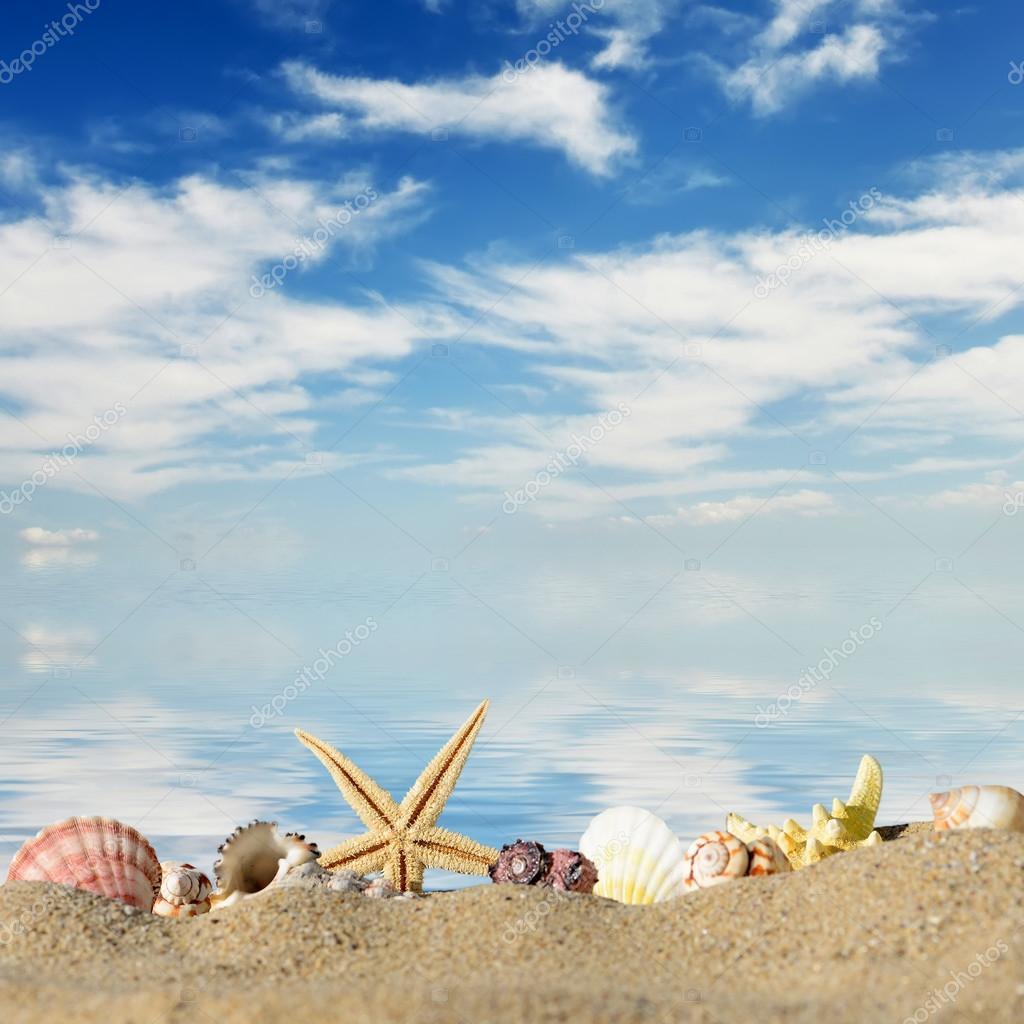 Priorit bassa della spiaggia conchiglie e stelle marine - Immagini di spongebob e sabbia ...