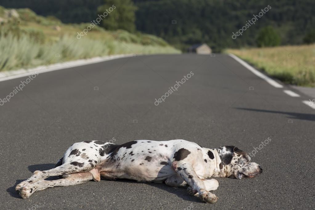dog photo road - photo #42