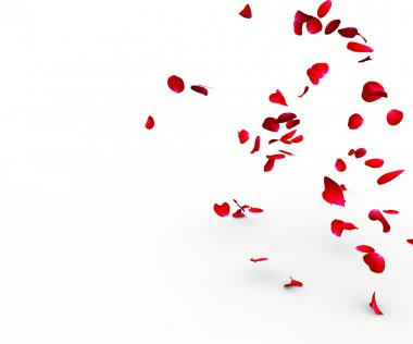 Rose petals falling on a surface on a white background isolated stock vector