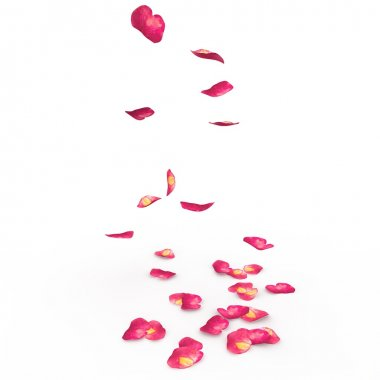 Petals of roses fall on a floor. The isolated background stock vector