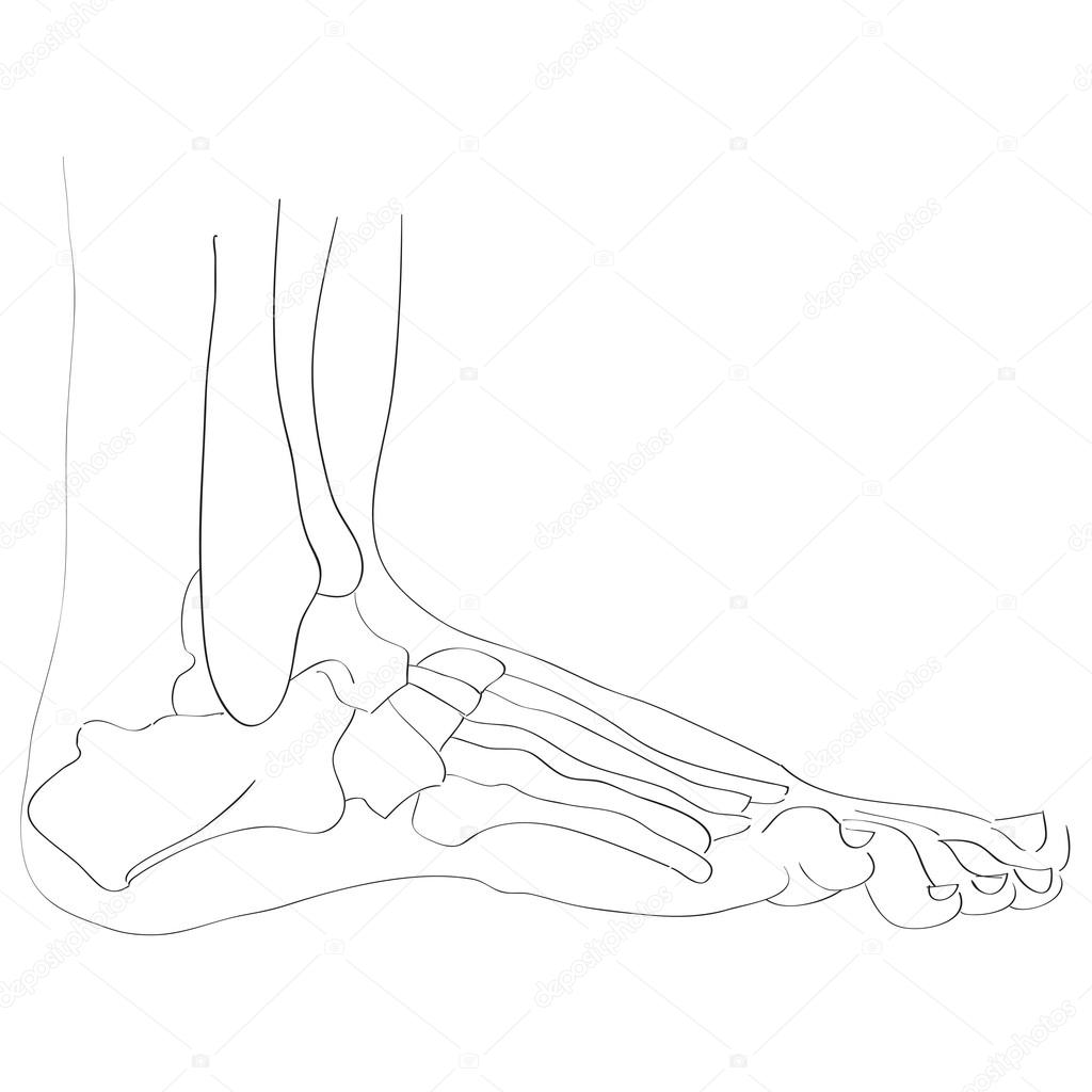 huesos del pie vista lateral — Fotos de Stock © richcat #118537652