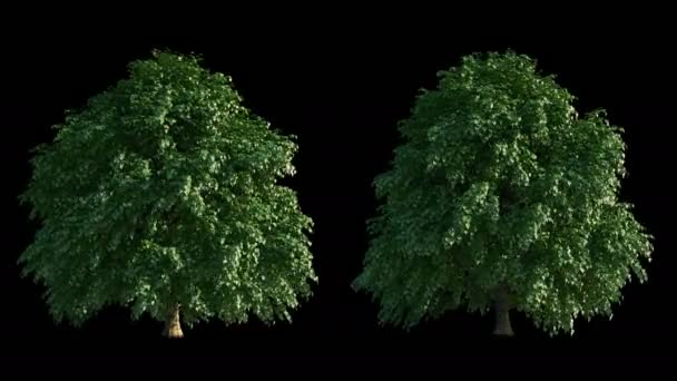 Growing trees time-lapse with alpha and wind