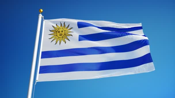 Uruguay flag in slow motion seamlessly looped with alpha