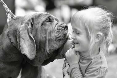 Purebred dog with little girl
