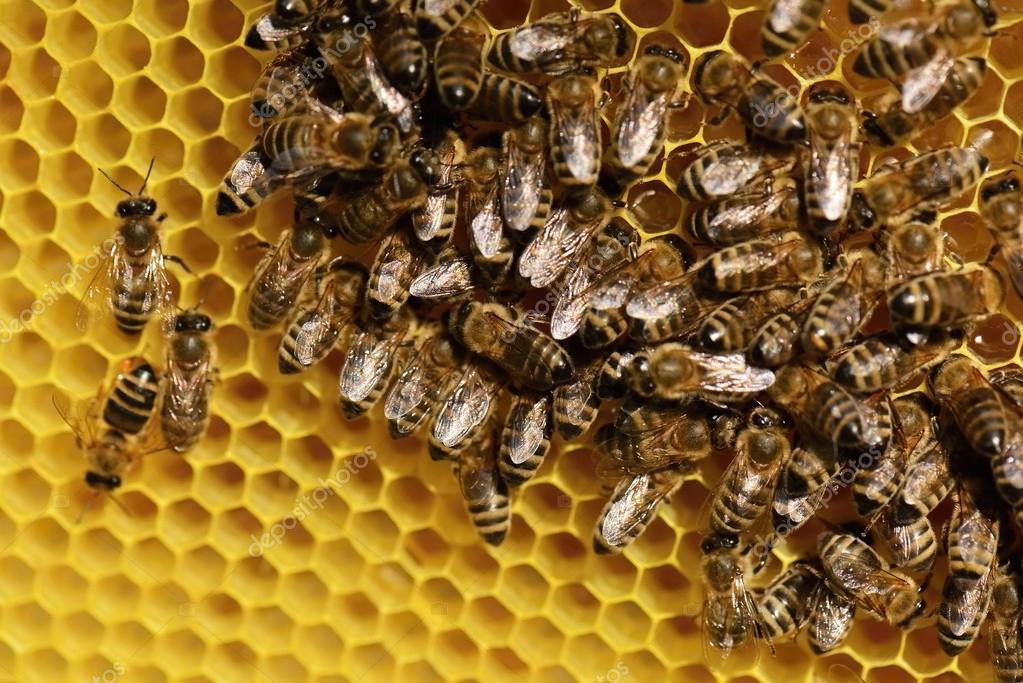 картинки трудолюбивые пчелы можно установить гостиной