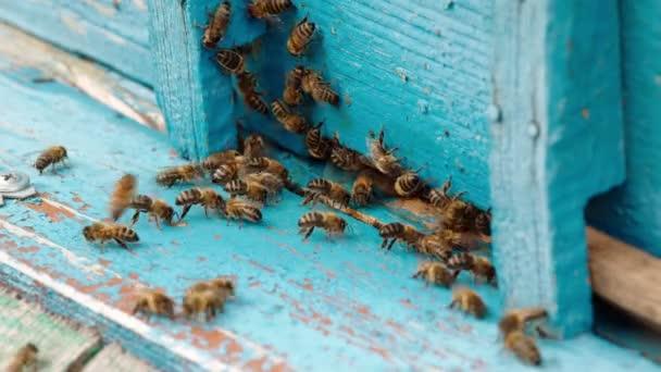 Včely blízko modrého úlu
