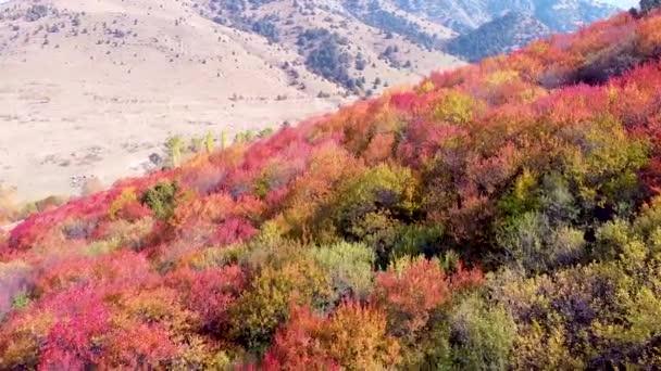 Jasně červené stromy na podzim na horském svahu. let přes fantastické zahrady