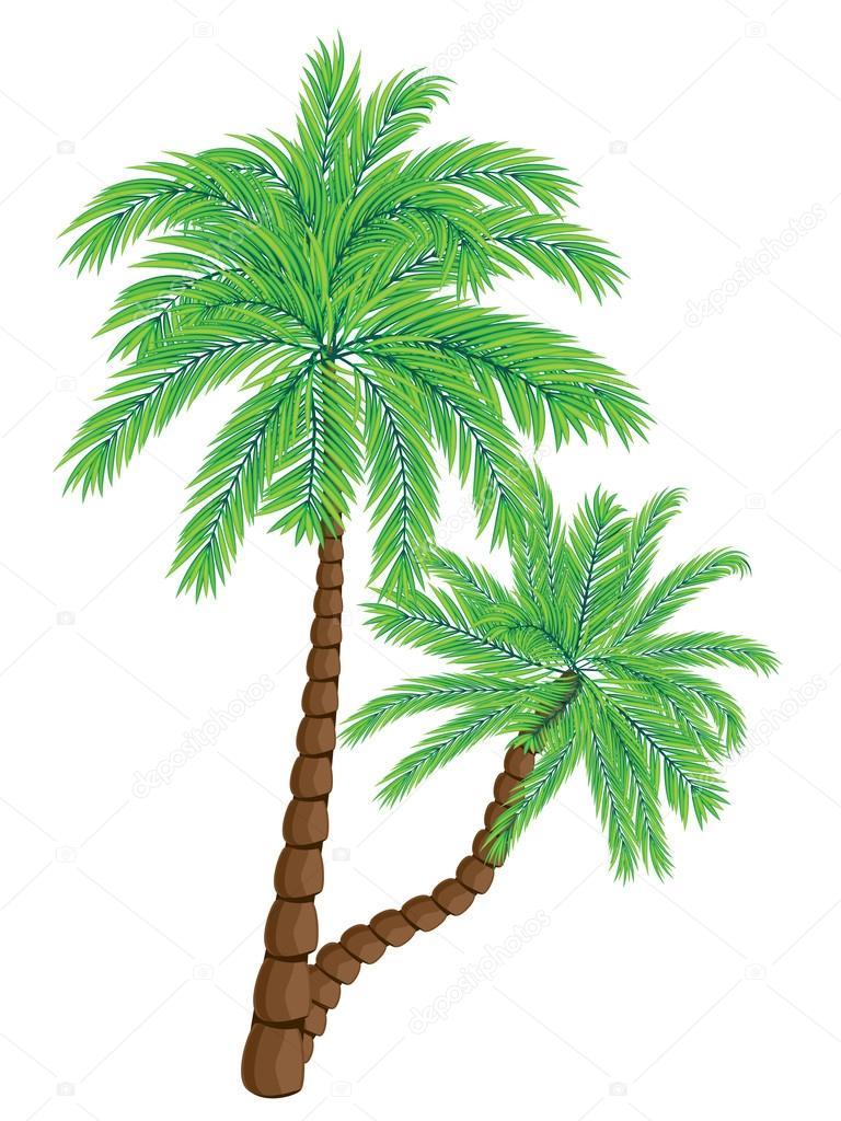 Two Palm Trees — Stock Vector © artshock #113471962
