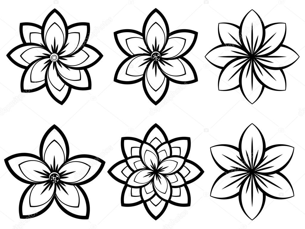 Цветок черно белый