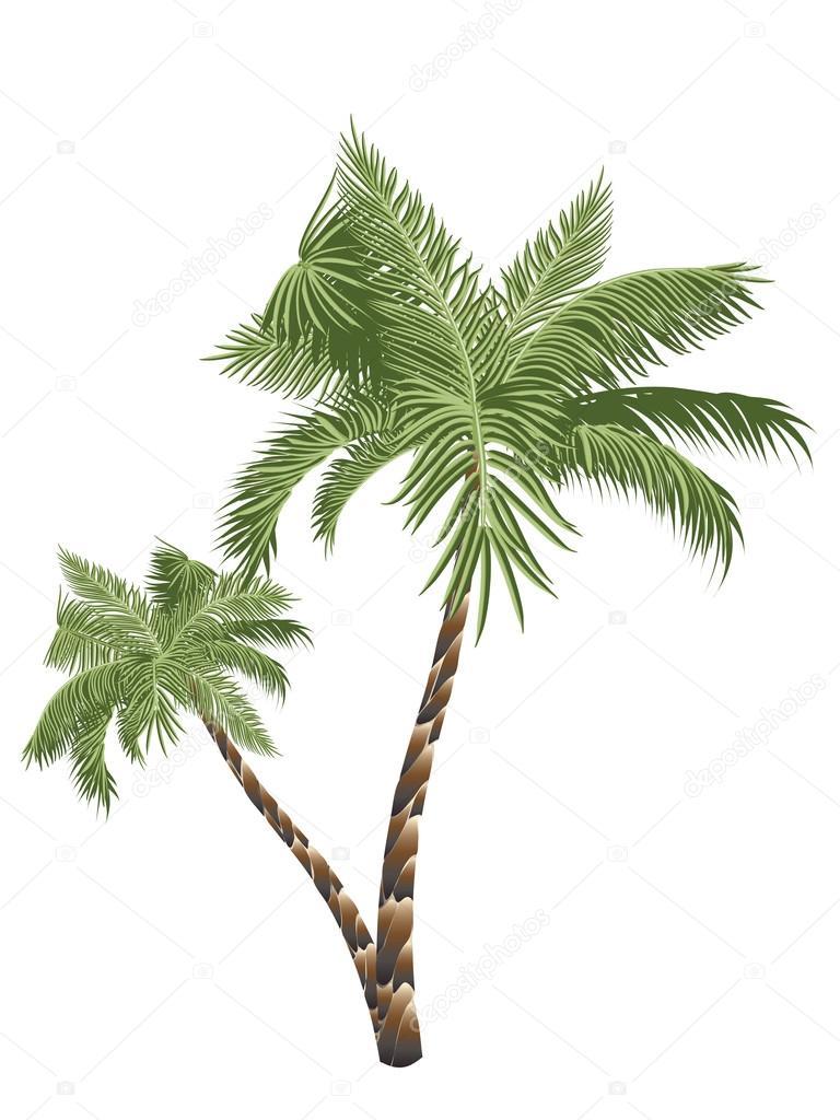 Two Palm Trees — Stock Vector © artshock #114998442