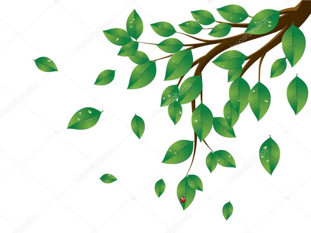 Rama De Un árbol De Hojas