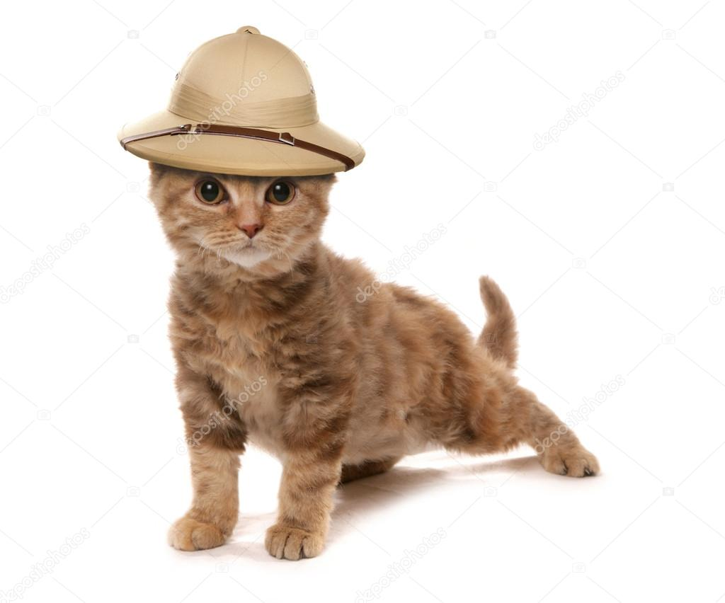 Gattino che indossa un cappello di esploratori nella giungla safair–  immagine stock ab5d9041cd68