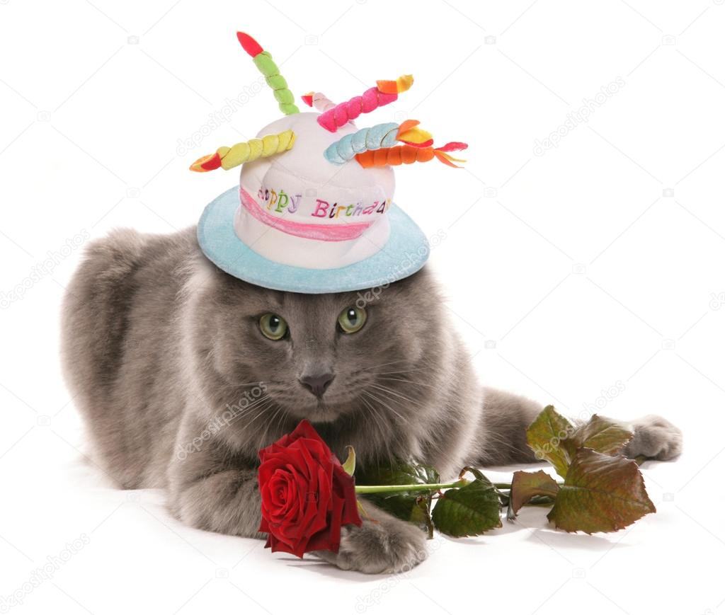 Funny Cat Wearing Birthday Hat Stock Photo