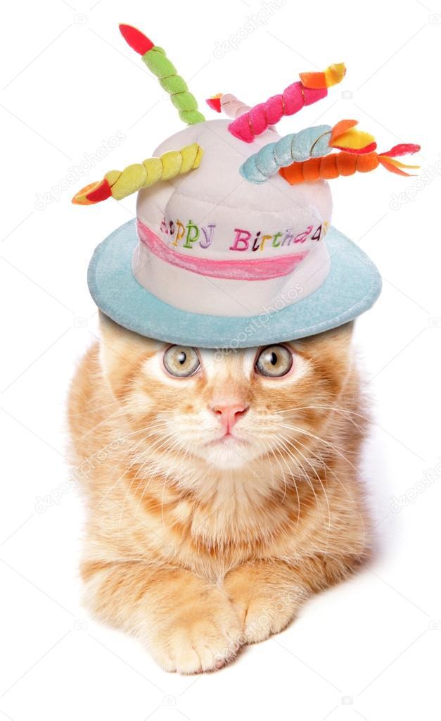 Lustige Katze Tragen Geburtstag Hut Stockfoto C Chrisbrignell