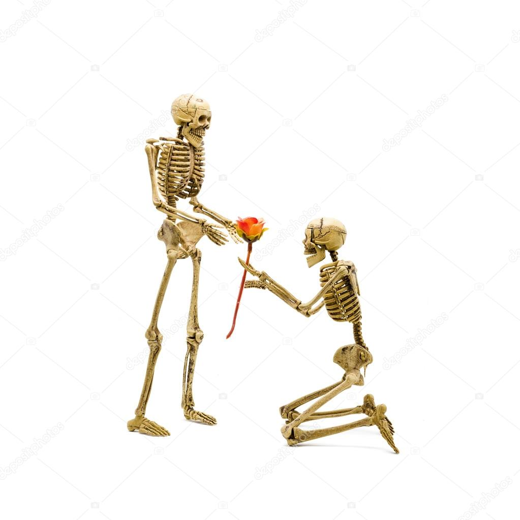 Skeleton Model Kneel Proposal To Girlfriend Giving Rose Stock Anatomy Diagram Related Keywords Suggestions Photo
