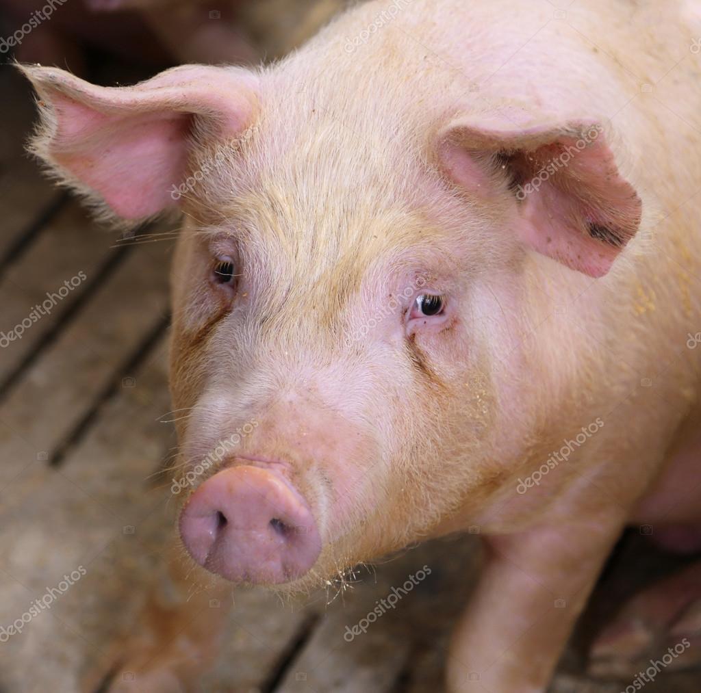 Cómo llegar a O Fuciño do Porco desde Foz