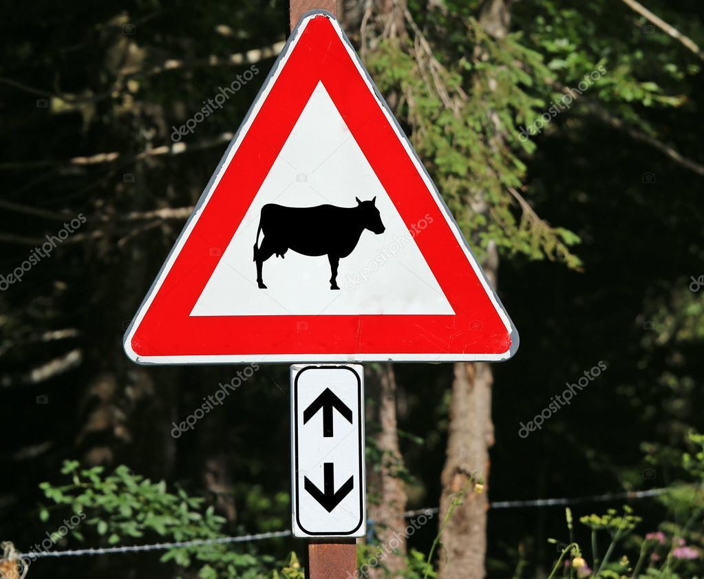 Extrêmement de signalisation attention vache de passage — Photo #119555674 LM98