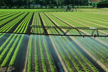 Automatic irrigation system in the field of lettuce