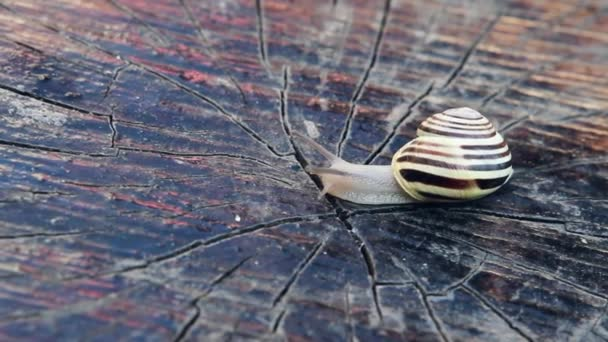 snail crawling on wood surface