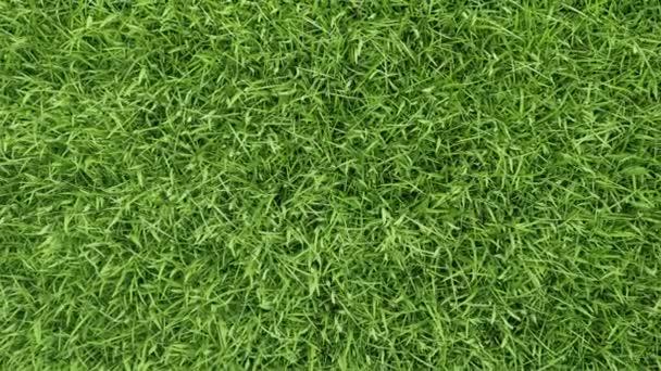 Zvětšit letecké zobrazení krásné zelené trávy nádvoří textury pozadí. Úhel kamery od letícího dronu. Koncept životního prostředí a ekologie. Venkovní přírodní scenérie. Video s pohybovým grafem 4K.