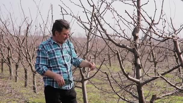 senior Man řezání větev s prořezávání nůžky na jaře.