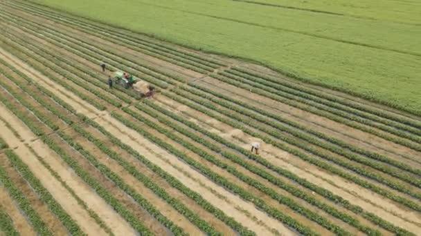 dron se otáčí kolem zemědělských pracovníků s traktorem v terénu,